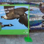 Az Invitel különleges installációt mutatott be Gyulán
