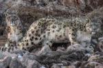 Nikon: nincs többé szakadék ember és természet között… Áááááá…