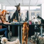 Nincs igény az állatbarát munkahelyekre