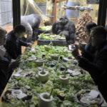 A mobiltelefonok újrahasznosításáért kampányol a fővárosi állatkert alapítványa